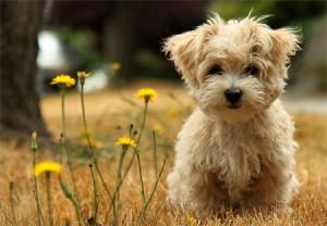 Nuove-regole-per-i-proprietari-di-cani
